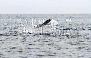MalBILL FISH 5