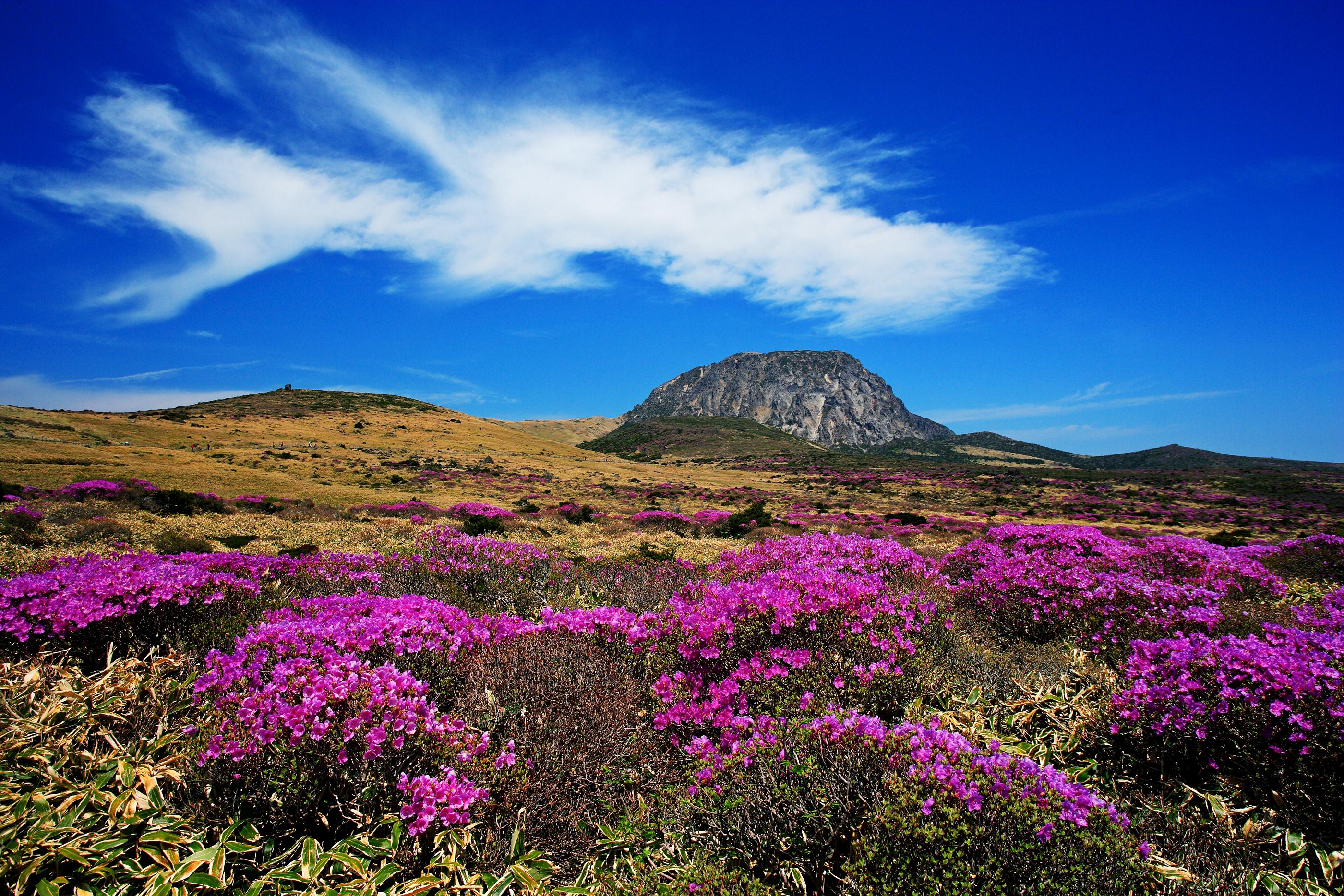 Jeju Island Volcano Tour