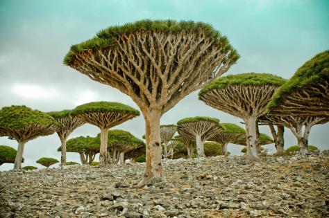 Series 7 -  Socotra IslandAden, Yemen