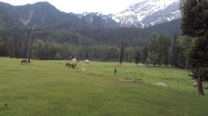 Kashmir 297