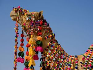 decorated-camel-in-the-thar-desert-2c-jaisalmer-2c-rajasthan-2cindia_1152x864_69131
